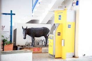 The famous donkey of Santorini.